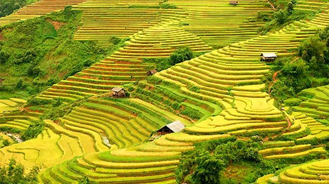 Ruộng bậc thang Hoàng Su Phì Hà Giang