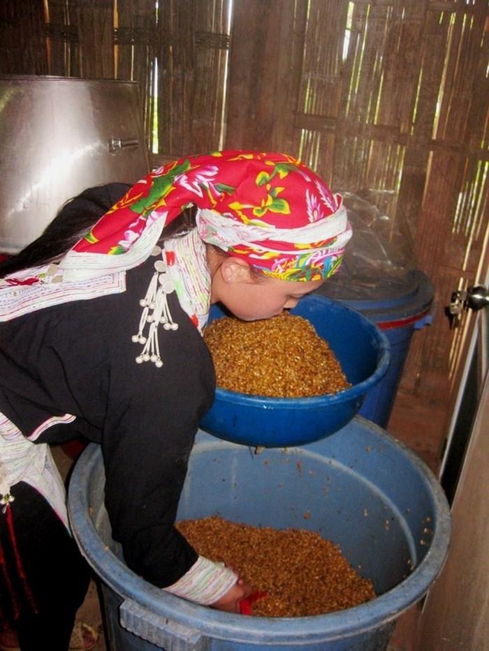 Thóc được ủ men trong dụng cụ khoảng 15 ngày