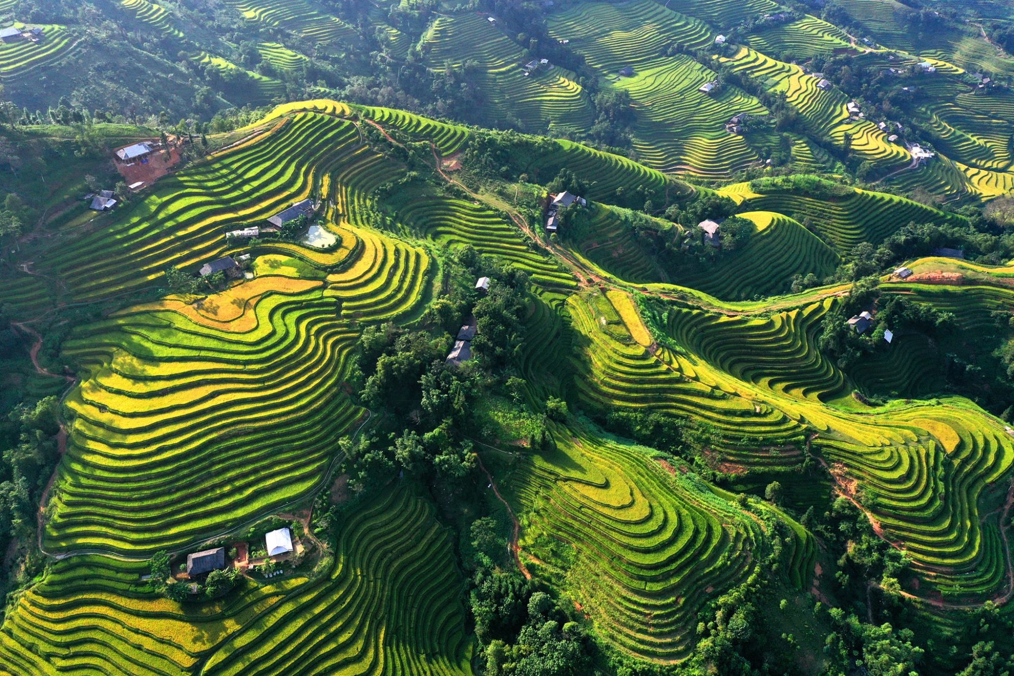 Ruộng bậc thang Hoàng Su Phì nằm trong dãy Tây Côn Lĩnh quanh năm mây phủ.